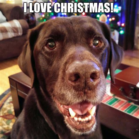 Christmas Dog Meme - i love christmas imgflip