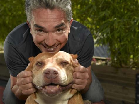 dog whisperer house training the dog whisperer s key to training is to never give up houston chronicle