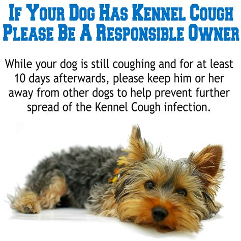 kennel cough symptoms in puppies castle vets kennel cough canine infectious bronchitis