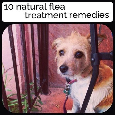 17 best images about flea and tick remedy on