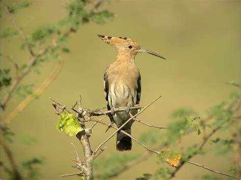 Charmant Reconnaitre Les Oiseaux Des Jardins #1: 3665636.jpg