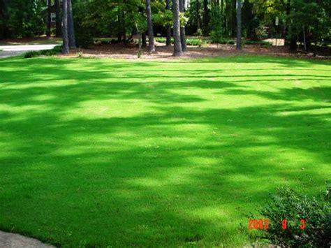 yukon bermuda grass seed turf quality improved cold tolerance