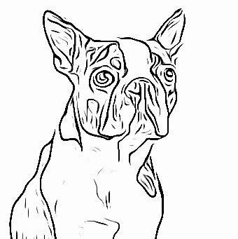 boston terrier coloring pages az coloring pages