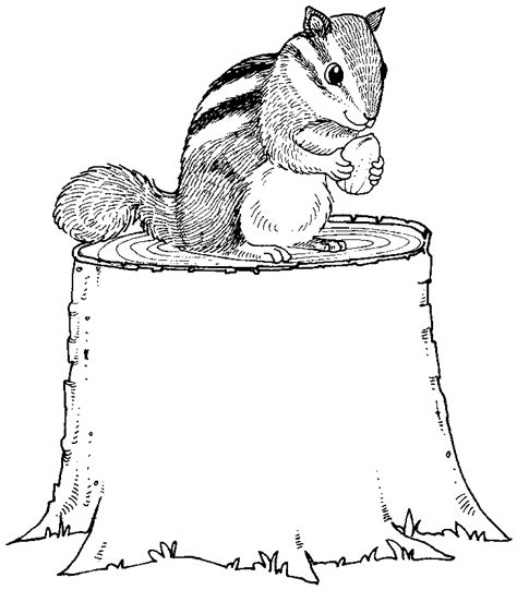 Free Chipmunk Coloring Pages Chipmunk Coloring Page