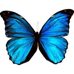 imagenes en png de mariposas one thing mariposas png