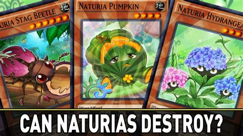 yugioh naturia deck will naturias destroy naturia deck showcase yugioh
