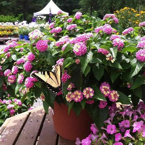 how to make a butterfly container garden a