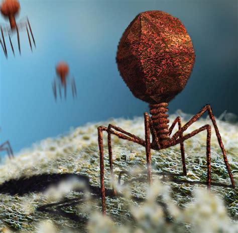 wann sterben hiv viren ab neue studie erstmals gespr 228 che unter viren belauscht welt