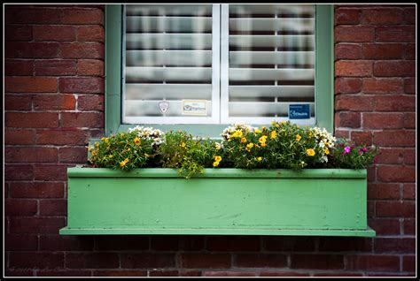 Flower Pots On Window Sills Lens Bubbles Window Sill Planter