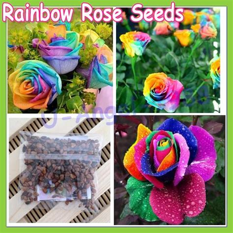 Order Roses by Image Gallery Order Rainbow Bush