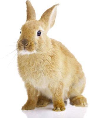 lettiere per conigli truciolo per allevamenti lettiere per conigli trucioli