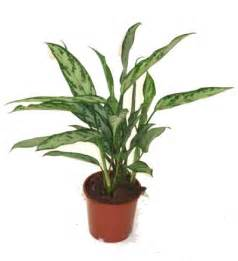 indoor potted plants for sale