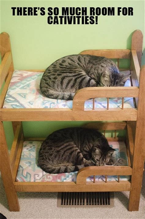 cute cat beds cute cat beds dump a day