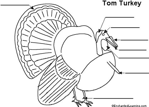 printable turkey parts label the turkey printout enchantedlearning com