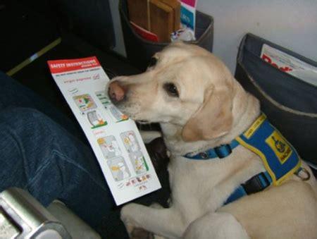 alitalia cani in cabina i consigli per viaggiare in aereo con il tutto ze