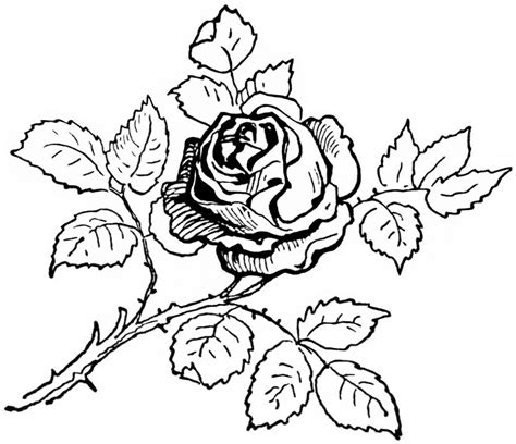 rose coloring page for adults coloring pages rose coloring pages getcoloringpages