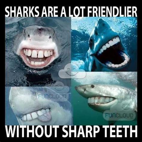 Funny Shark Memes - sharks happier with teeth funny pinterest shark teeth and memes