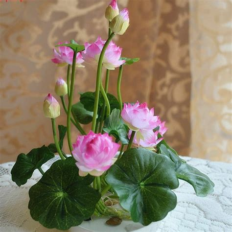 new year lotus flower 5 flower lotus fresh delicate small size water