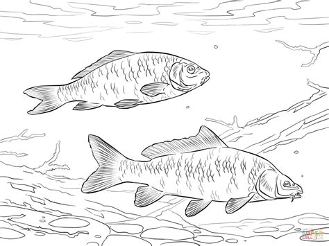 carp fish coloring pages click the common carps coloring pages carp fish coloring