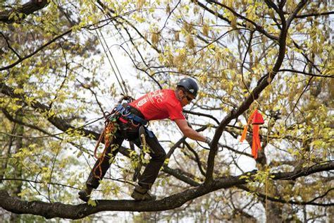 Home Decor Burlington meet 30 year old arborist krista strating chatelaine