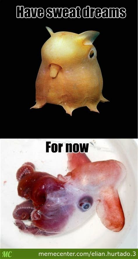 Octopus Meme - octopus meme 28 images dumbo octopus by recyclebin