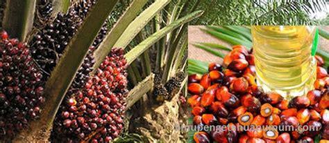 Daftar Minyak Kelapa Sawit 10 negara penghasil minyak sawit terbesar di dunia