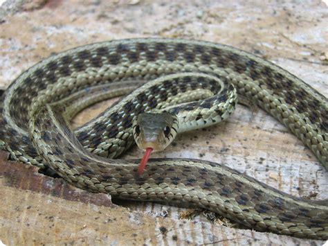 spider  killed  snake   basement