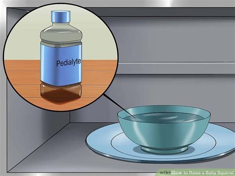 puppy formula without yogurt how to raise a baby squirrel with pictures wikihow