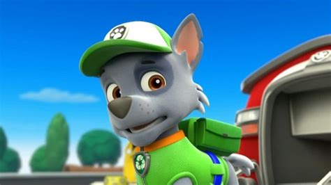 paw patrol breeds paw patrol images rocky the mixed breed hd wallpaper and background photos 40126963
