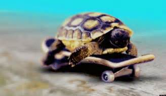 Baseball Home Decor awesome tortoise cute picture images photos pictures