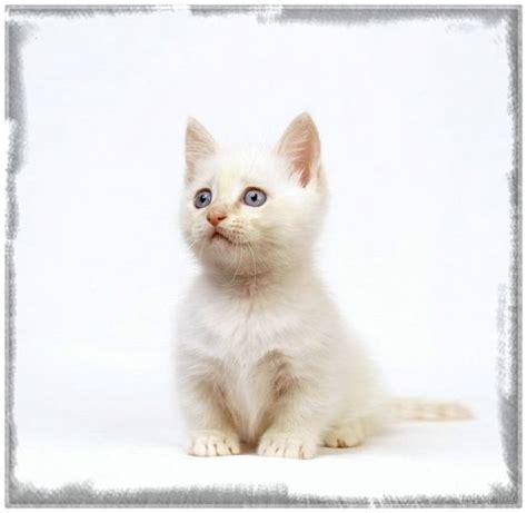 descargar imagenes sarcasticas para bb fondos de pantalla de gatitos bebes tiernos archivos