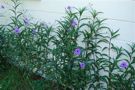 flowering shrubs for florida matelic image florida flowering plants with photos