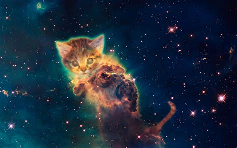 wallpaper galaxy cat galaxy cat wallpaper 69 images