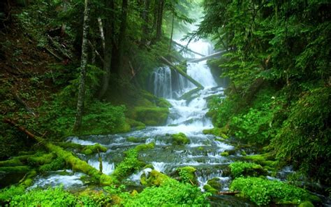 stream beautiful forest nature waterfall wide