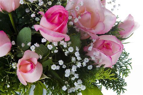 imagenes de flores mas lindas del mundo ranking de flores hermosas ramos de flores para cumplea 241 os