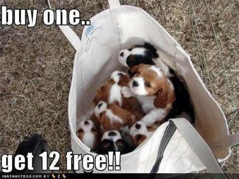 what to buy for a puppy buy one get 12 free puppies photo 13462531 fanpop