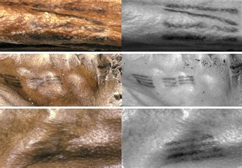 otzi the iceman tattoo pax on both houses mapping 61 ancient tattoos on a 5 300