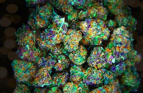 colorful marijuana colorful strains colorful strains www pixshark images