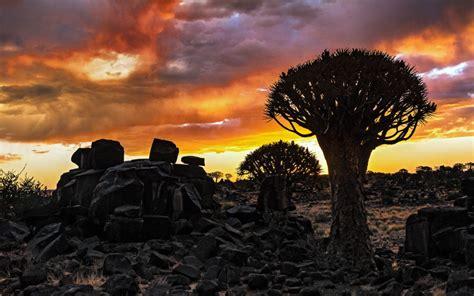mesosaurus fossil bush camp fire sky  south namibia