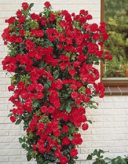 Plante Balcon Nord by Quelles Plantes Grimpantes Choisir Pour Un Balcon Ou Une