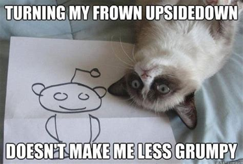 Make A Grumpy Cat Meme - 10 new grumpy cat memes