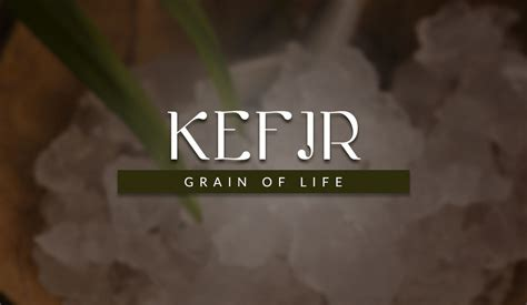 kefir for dogs kefir water for dogs healthy superfood probiotic for pets