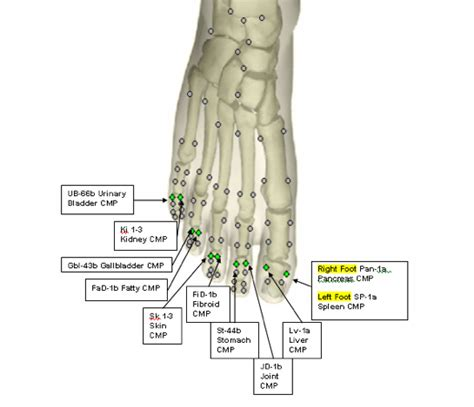 Isotonic Foot Detox by Pin Acupuncture Points On