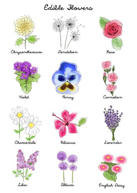 Printable List Of Edible Flowers | 23 best edible flower information images on pinterest