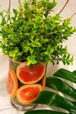 fruit exles flowers in nanopics how to use citrus fruit in fresh