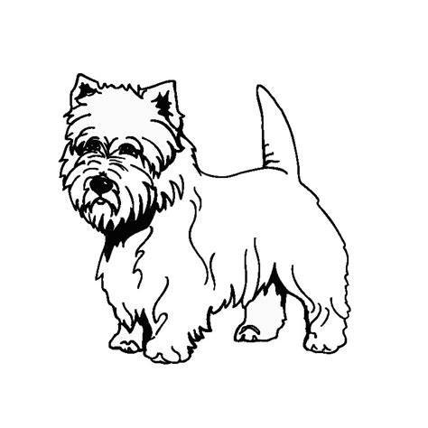 Westie Coloring Pages free coloring pages of westie dogs