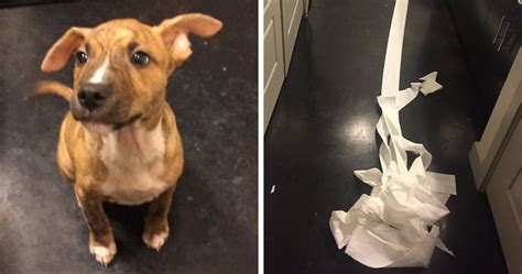 8 year old dog peeing in the house people fall in love with dog who tried to clean up his own pee from owner s friend
