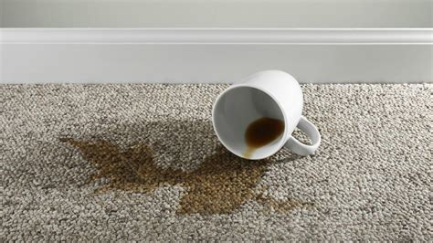 How To Get Coffee Stains Out Of Car Upholstery by How To Get A Coffee Stain Out Of Light Carpet Carpet Review