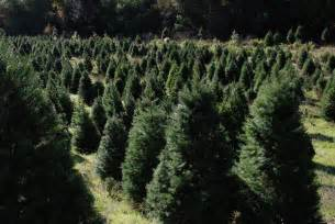 castro valley christmas tree farm home page
