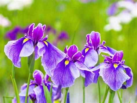 popular spring flowers the reader s digest guide to the best summer flowers in canada